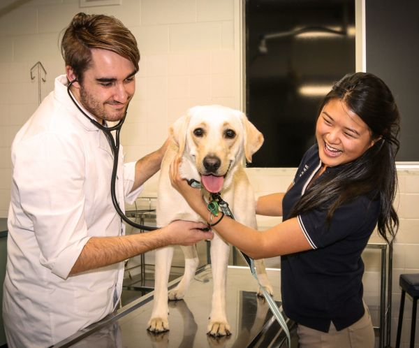 Michelle assists in a clinical examination of a dog