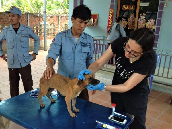 Rebecca Traub examines a community dog during a visit to Cambodia. Photo: Dr Vito Colella.